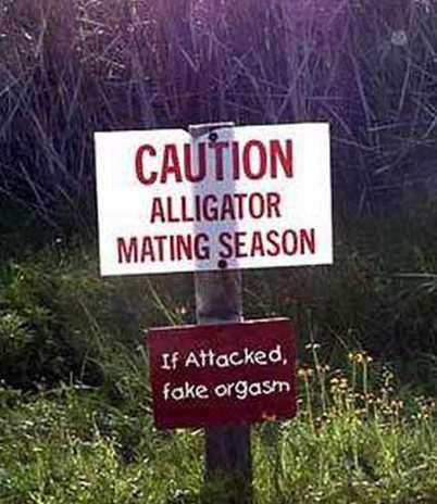 Crazy Signs dept: Alligators