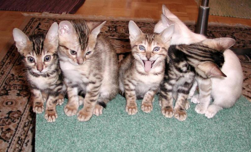 Cat Life: Happy Friendship