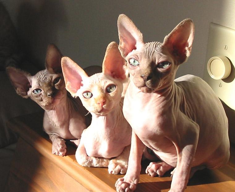 Freaky Cats