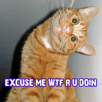Funny Cats: Excuse me...
