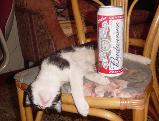 Cat life: Getting drunk