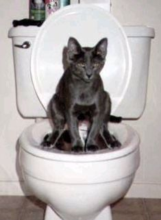 Educated Peeing Cat