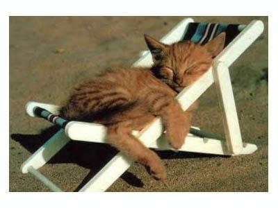 Cats: Relaxing