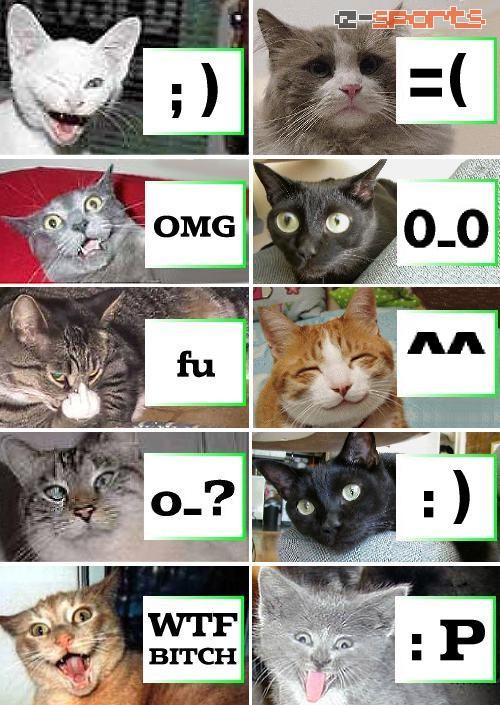 Crazy Cats - Emoticons explained