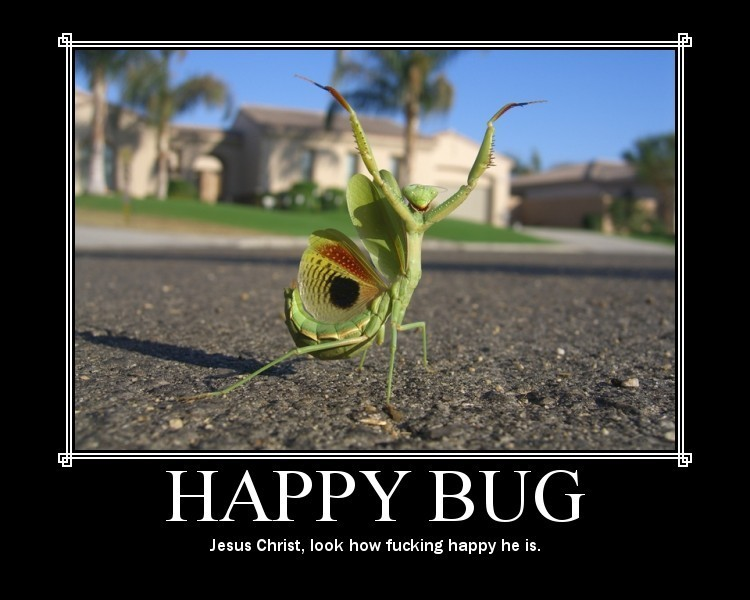 Crazy Motivationals: Happy Bug