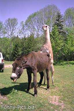 A moment of donkey fun
