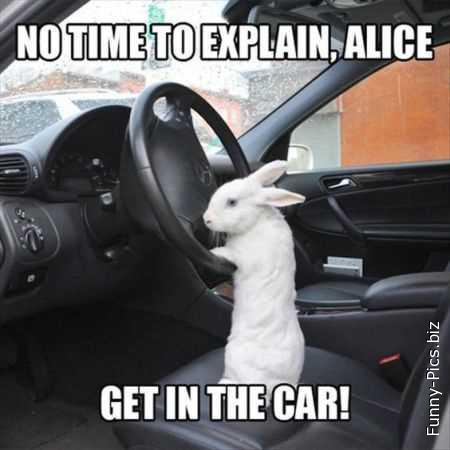 Alice in wonderland 2.0