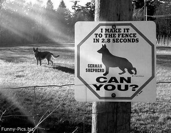 Funny Signs: Beware at the Dog
