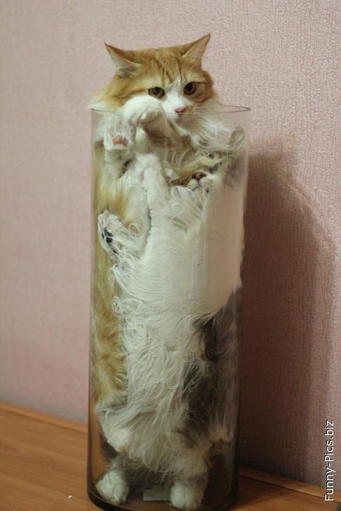 Tuber cat