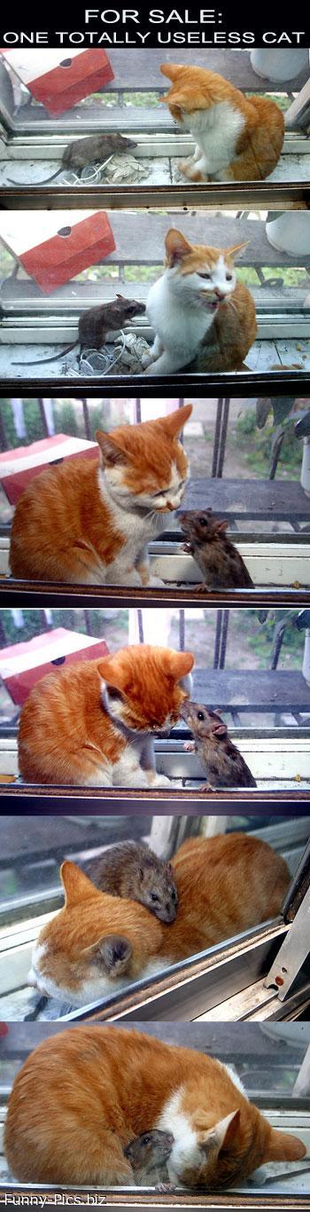 Cat N Mice Stories