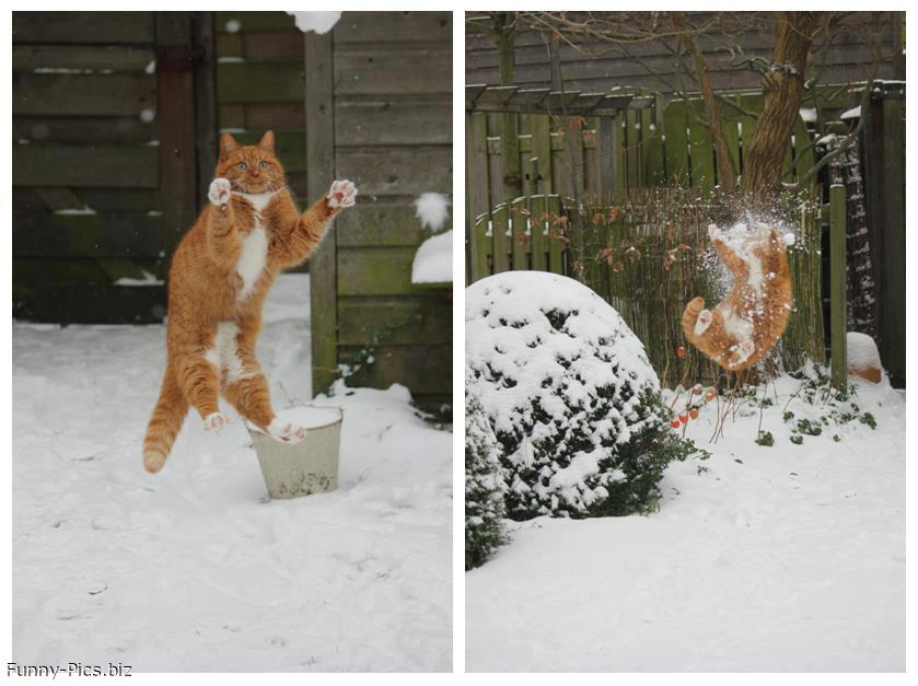 Cat playing with Snowballs