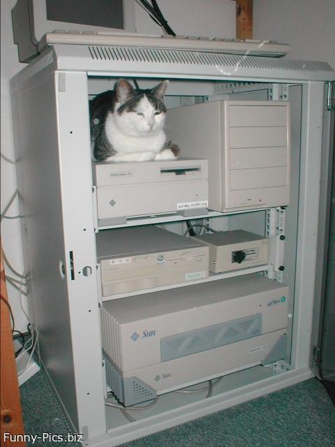 Cat Storage