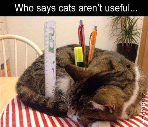 Cats are useful