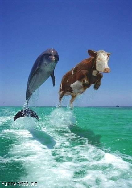 Cowfish and Dolphins