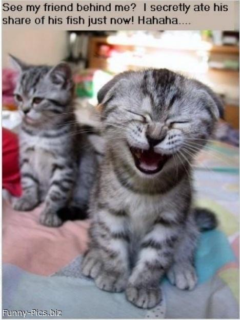 Crazy Cats: Tricked