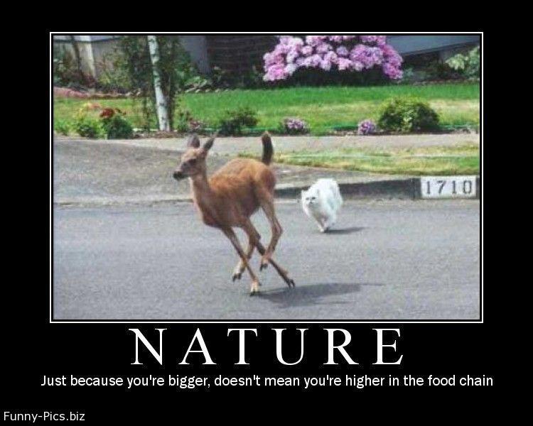 Crazy motivationals: NATURE