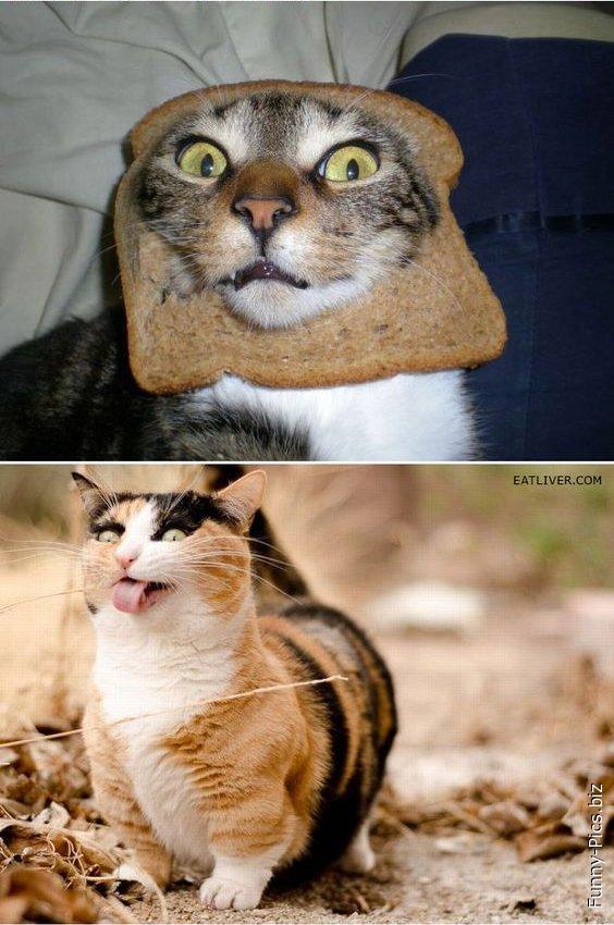 Derpriest cats 2
