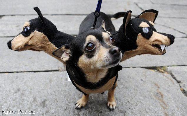 Dog gadget