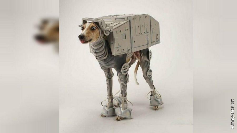 Dog turned into Star Wars land fighter