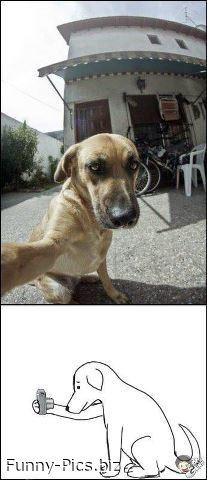 Dog's self picture