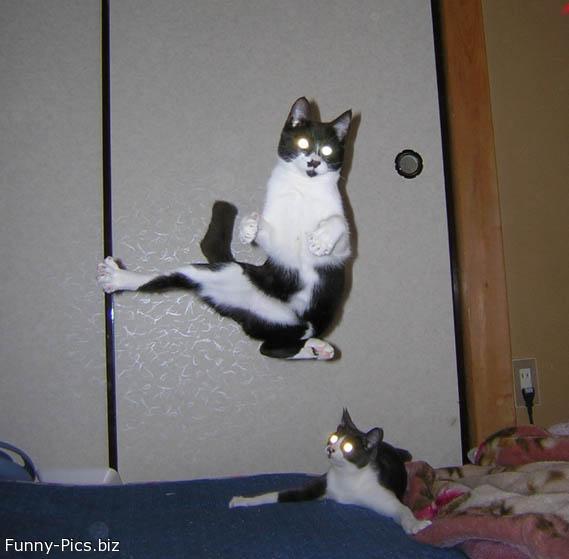 Electrified cats