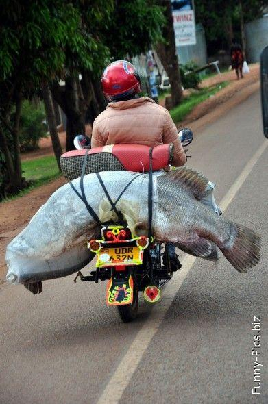 Fish transportation