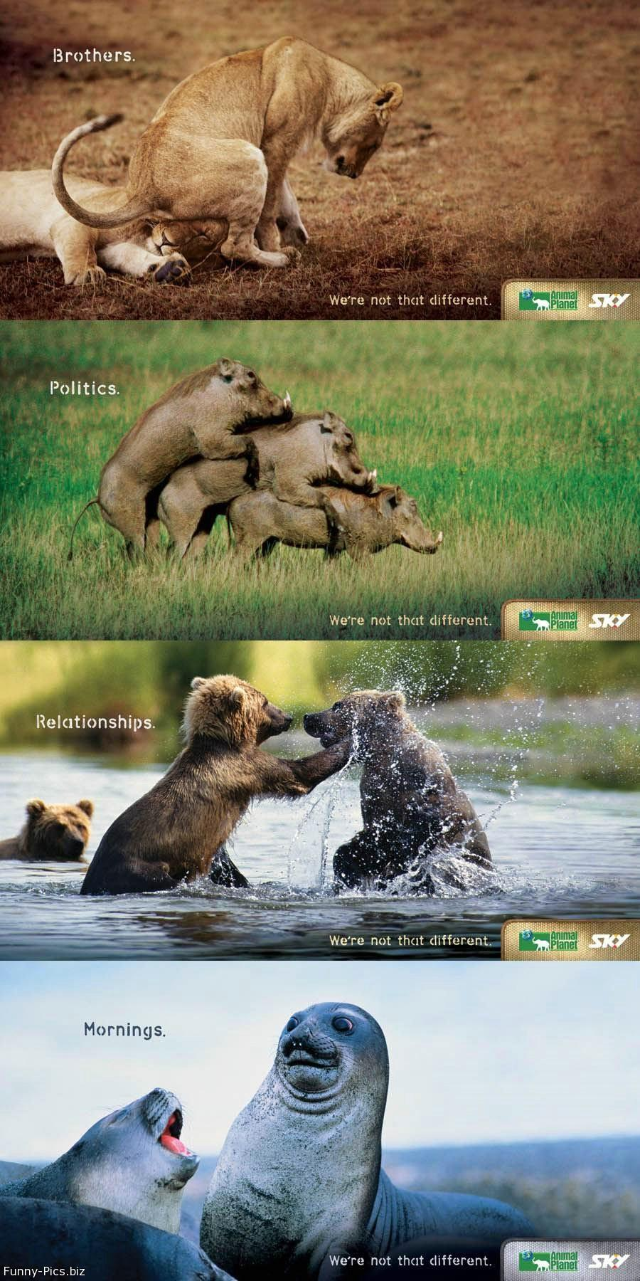 Funny Ads: We're not that different