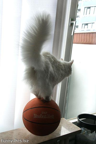 Funny Cats: Basketball trick