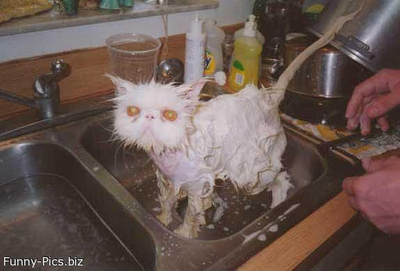 Funny Cats: The Ugly