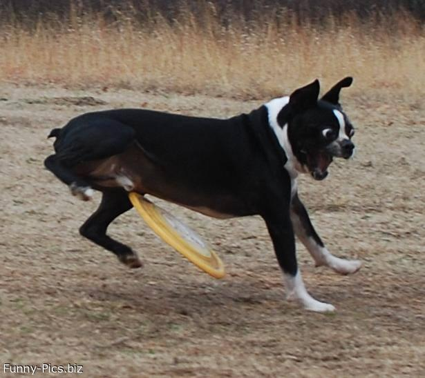 Funny Dogs: Ooops the freesbee!