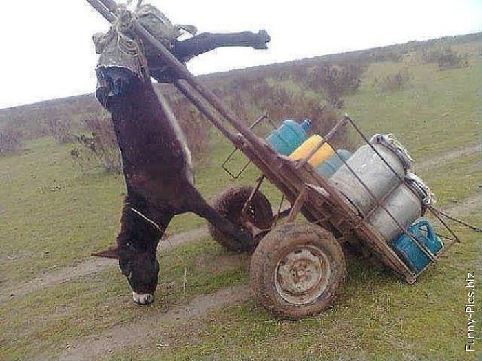 Loading cart fail