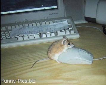 Mouse meets mouse