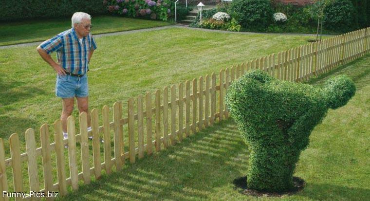 Neighbour's bush
