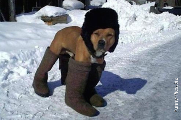 Organized dog against cold weather
