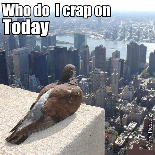 Pigeon's thoughts