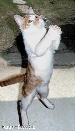 Prayer of a cat