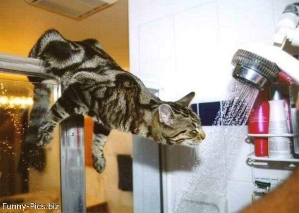 Showering Cat
