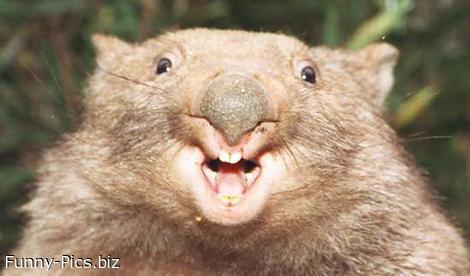 Surprise beaver!