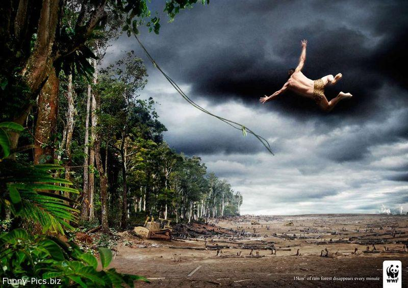 Tarzan and deforestation