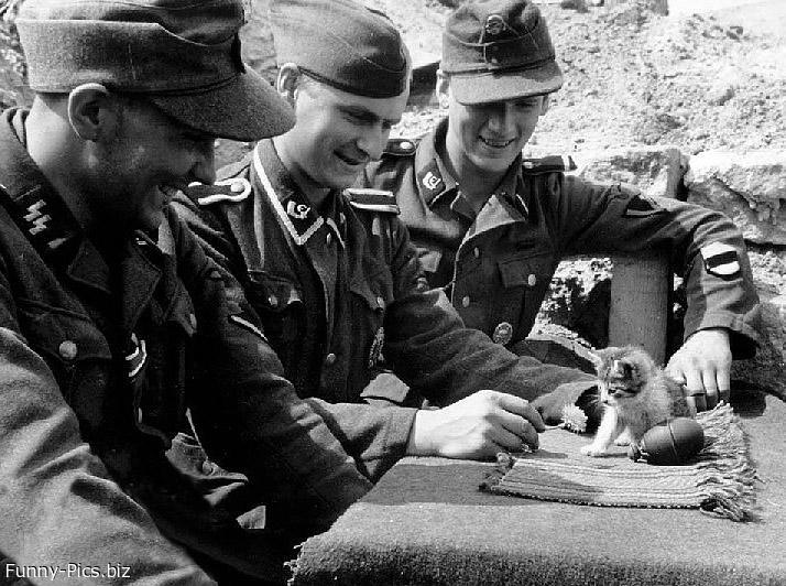 Tender Nazi Officers