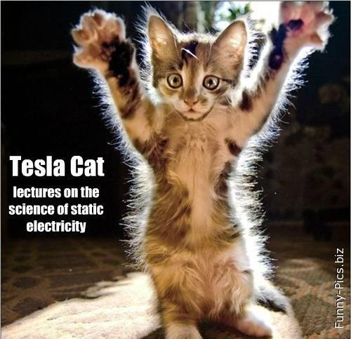 The Tesla Cat
