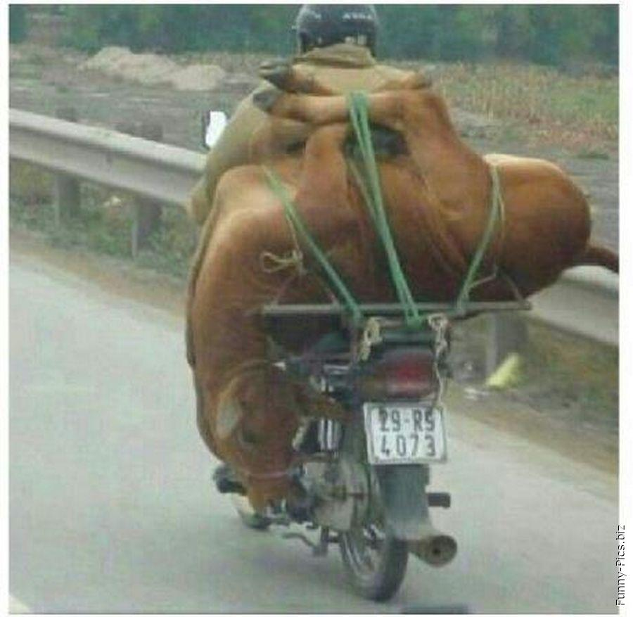 Transportation fail: the animal