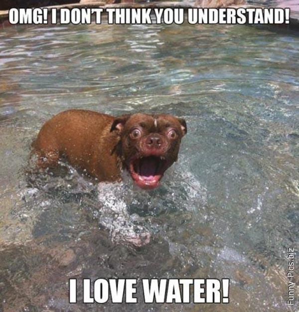Water Lover Dog