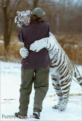 White tiger love