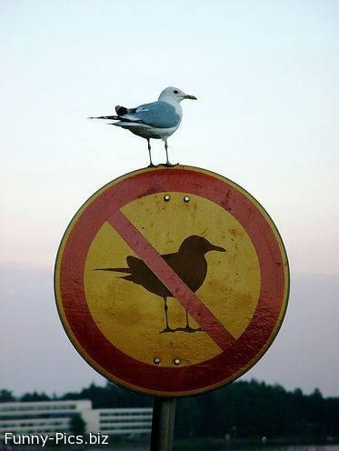 Will to break the rules